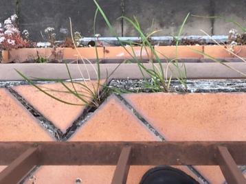 Présence de végétation sous le revêtement de sol sur un balcon